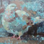 Dawlish Pigeon - Oil on board - 2011