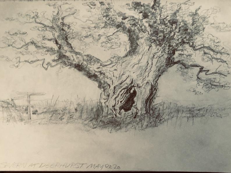 Tree at Deerhurst